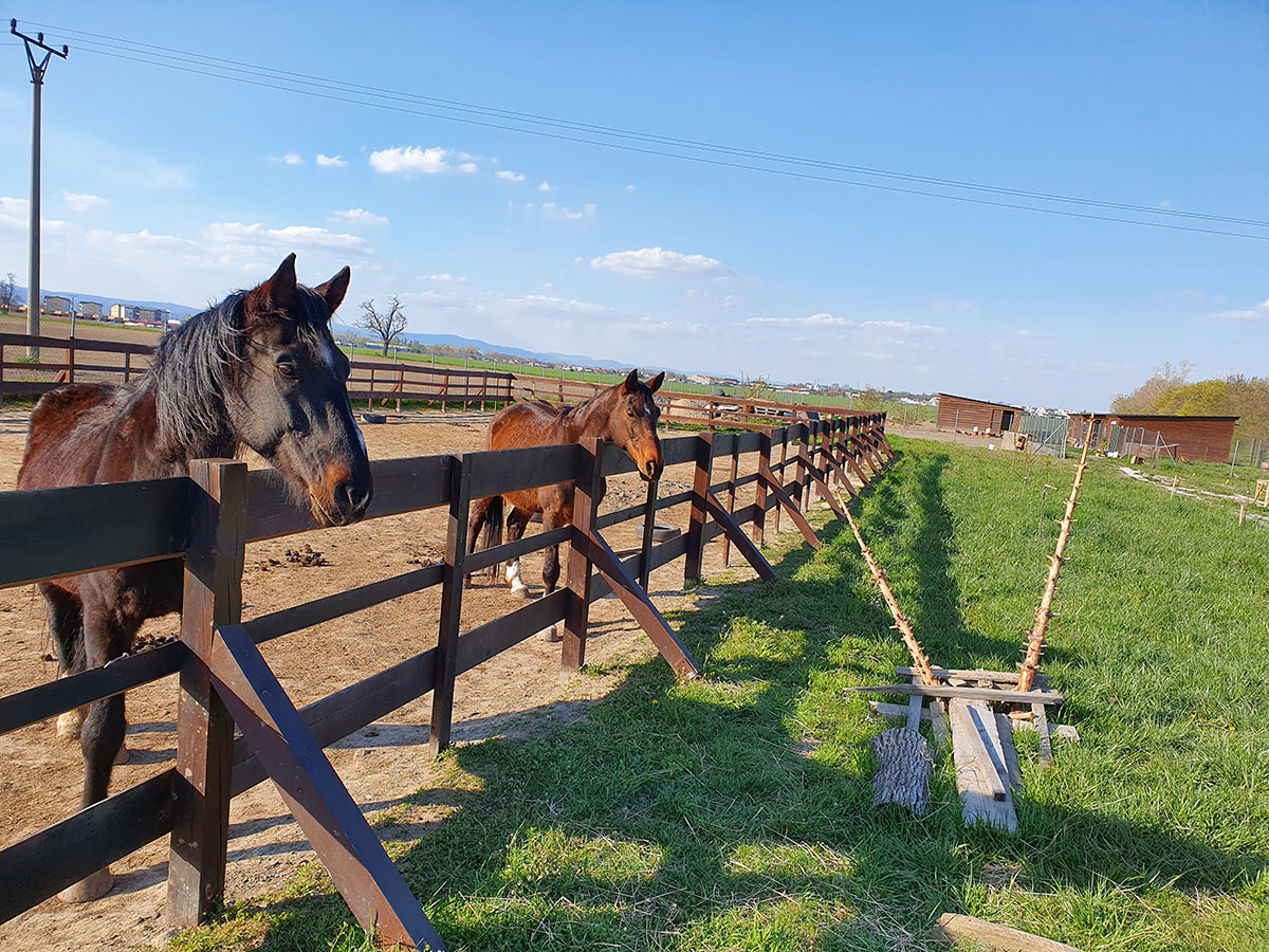 Kozia farma MOST pri Bratislave