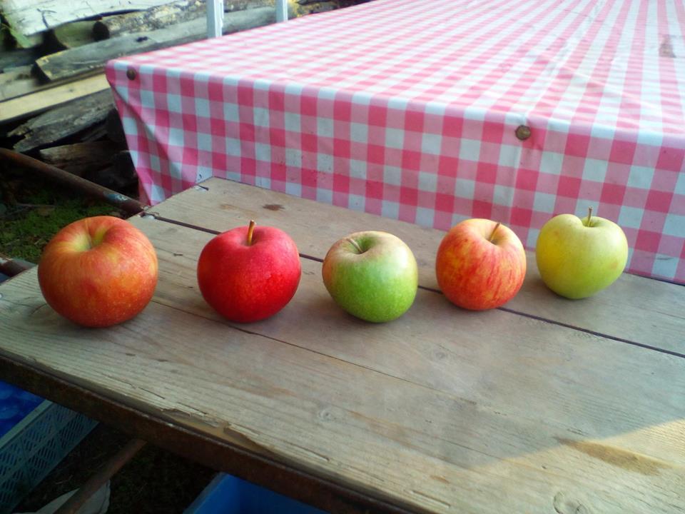 Samozber jablk a hrusiek